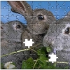 puzzle-personalizat-iepure